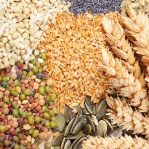 Beans, Lentils, & Grains